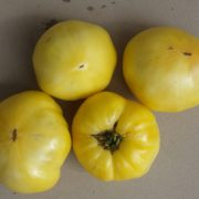 graines tomates white wonder