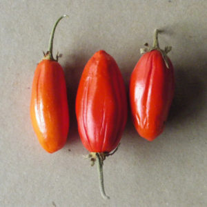 Aubergine africaine Red Egg BIO
