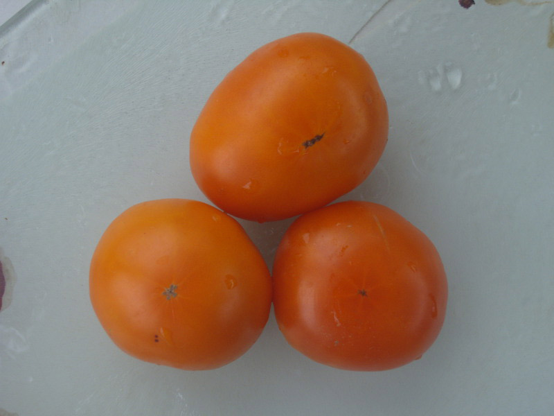 graines tomate orange queen solanum lycopersicum
