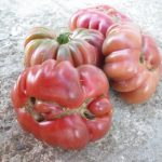 graines de tomate Purple Calabash