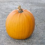 graines courge Jack o Lantern